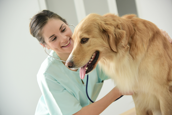 3 Symptoms of Untreated Hypertension in Dogs